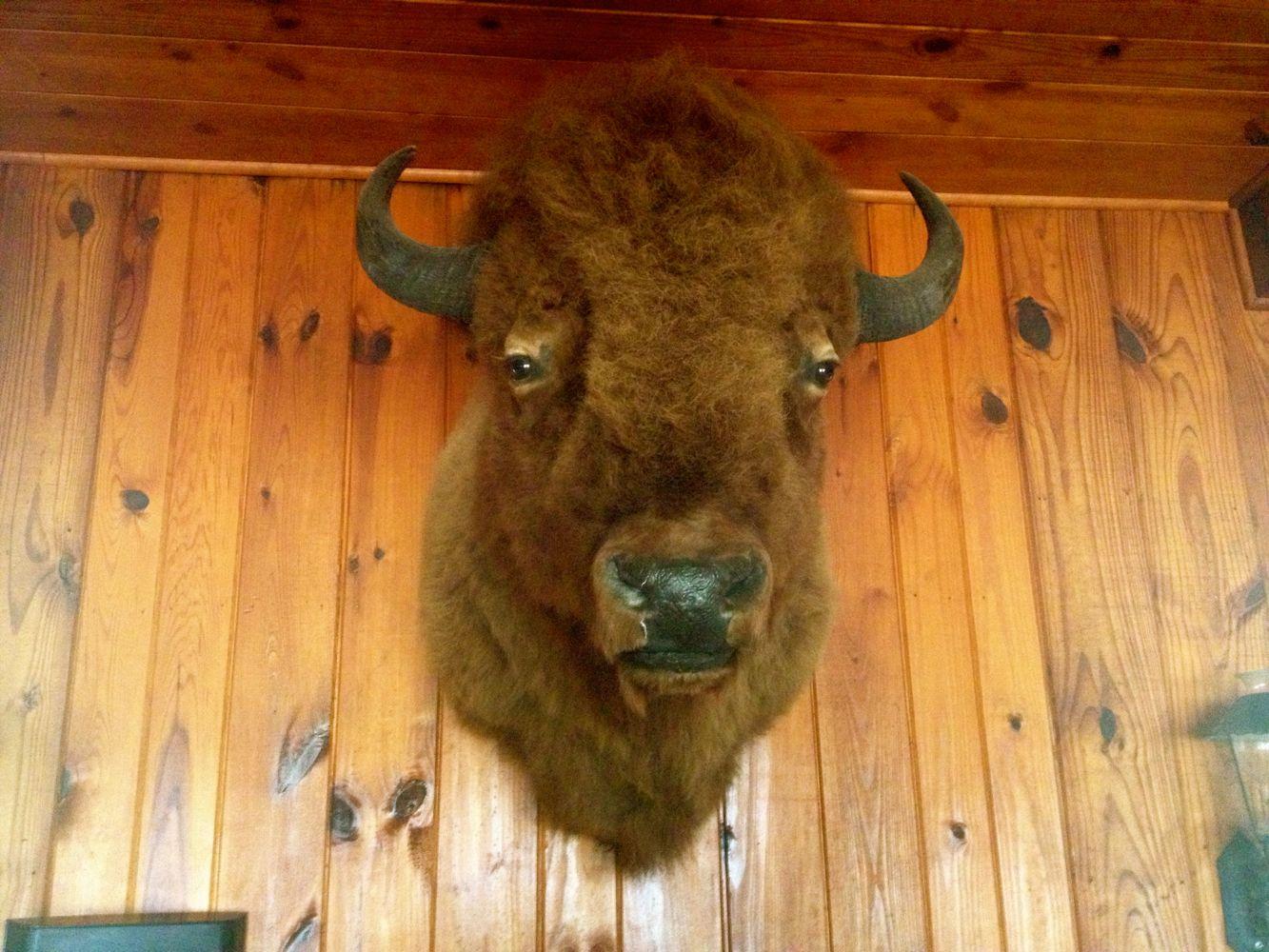 BuffaloHeadBaja